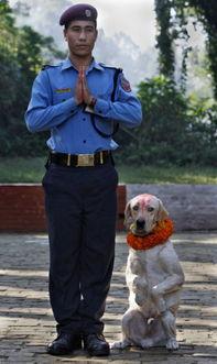 ...狗等动物以取悦神灵礼赞生命