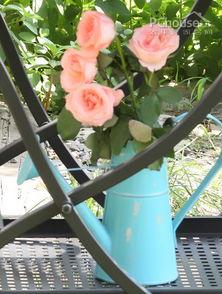 【其他】夏天有什么花-...丝的甜蜜歧途 夏日花园扮靓术