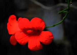 绽放的花朵