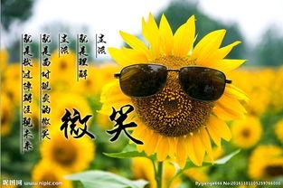 向日葵花语图片