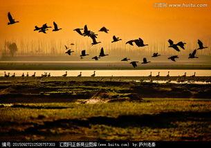 候鸟-动物摄影摄影图片专辑,正版商业图库,汇图网 huitu.com