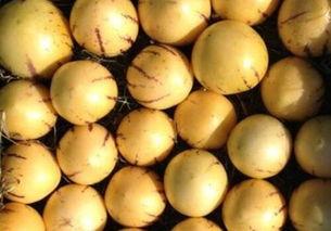 人参果市场价格大约多少钱一斤 皮能吃吗,怎么吃好吃