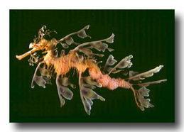 龙王宝藏叶渔传-...龙不是人名,是海龙王