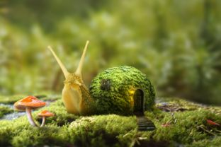 蜗牛的家 合成