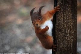 英国野生动物摄影奖揭晓