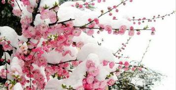 古代诗人描写花的诗句,美不胜收 还有一首皇帝写的