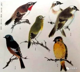 黄鹂、翠鸟、蓝鸫、n_、十二红   绯胸鹦鹉、白头鹦鹉、葵花鸟