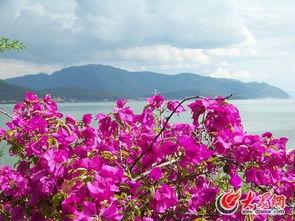青山如墨千秋画,绿水无弦万古琴   情侣在洱海边拍婚纱照   洱海边的...