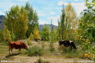 田园牧场图片