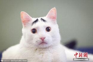 艹猫0补丁krkr2-另一方面,基于