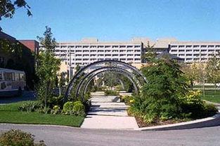 学院血红天-约克大学-我国一女留学生在加拿大多伦多遇害 喉咙被割
