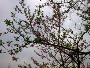 描写初春的现代诗句