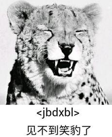 ...情 可以说非常豹笑了系列表情包下载 很搞笑的表情 正式版 一系列豹...