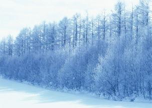 南方的天空飘逸着北方的雪花