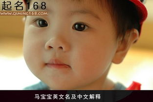 马宝宝英文名及中文解释