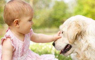 错过后悔 狗取什么名字好,狗取什么名字最好听