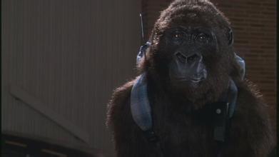 ...国影视作品中的类人猿多为非洲的黑猩猩和大猩猩 而不是印尼的红猩...