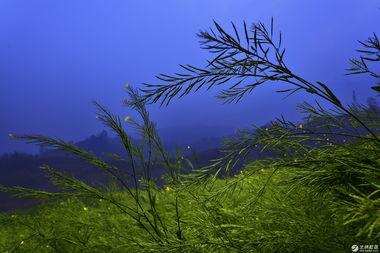 阴霾天   雨中落花   最后的油菜花