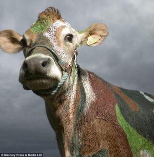 英国摄影师拍动物大头照