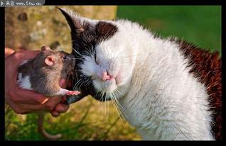 猫和老鼠的图片