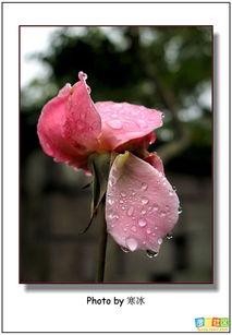 都是花之泪的结晶