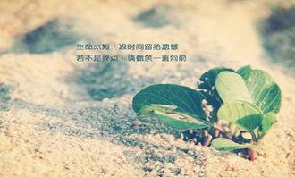 QQ炫舞手游怎么购买情书表白