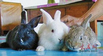 了4只纯黑色的小兔子,让人觉得... 李淑兰老人说,她养了多年兔子,...