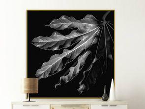 现代简约黑白树叶静物摄影装饰画