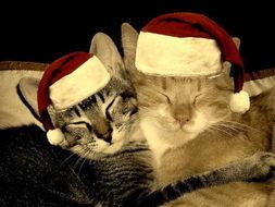 艹猫0补丁krkr2-圣诞动物也快乐 可爱猫咪迎接圣诞
