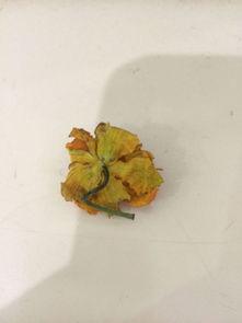 这是什么花,可以泡水喝的,我是用腊梅花和它一起泡的