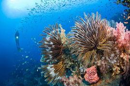 )   珊瑚礁三角区的生物多样性正面临双重威胁.本文是自然保护主义...