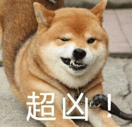 表情 超凶 柴犬呲牙吓唬人 可爱表情 斗图表情包 微信表情包大全 QQ表...