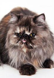 猫体内寄生虫