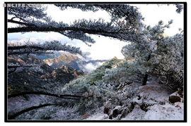 后来的雪-春季黄山来拍雪