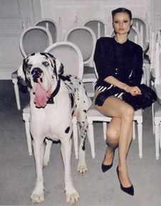 色狗狗,连美女的最后一件衣物都不放过