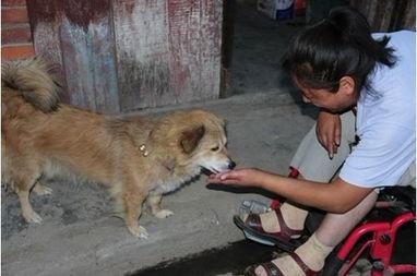 忠实狗狗和残疾女子相伴10年 演绎真实版人狗情缘