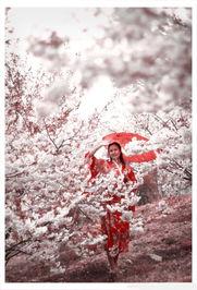 花树底下那一个倩影、捧着樱花落英的玉手、或者是花群掩映下的一个...