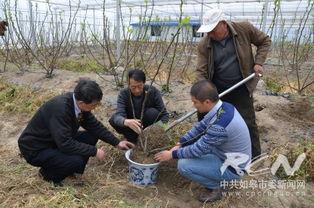 国际盆艺大师花汉民先生逝世