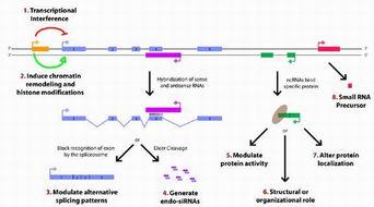 定量PCR引物设计
