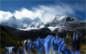 ,就像一只展翅翱翔蓝天的雄鹰.   山上的蓝色小花和长得像蜈蚣一样...