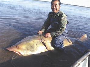 南山兵哥大长茎-5日,伊春市嘉荫县扬氏兄弟在黑龙江打鱼时,捕捉到一条500多斤的大...