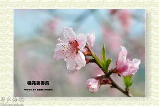 ,在青山碧水旁绽放出妩媚清纯的笑脸.给这春光烂漫、百花吐艳的季...