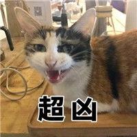 表情 网红猫咪超凶表情包大全猫咪超凶巨凶宇宙最凶表情包 腾牛个性...