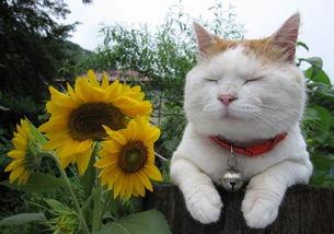 艹猫0补丁krkr2-无论是微博或者ins总有那些特别招人喜欢的宠物,尤其猫咪,他们有...