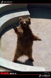 ...物园之 一组 熊片