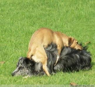 姐妹俩跟狗做爱-...事 小狗与老虎交配