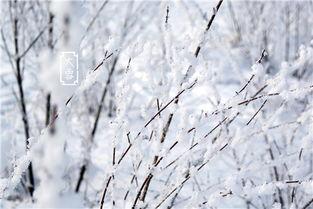 ...017最新关于雪的网名带雪字的 适合大雪的唯美个性网名
