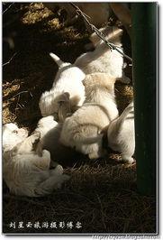 流浪狗妈妈和孩子们在一起实拍