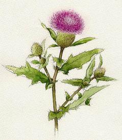 日本水彩花卉 来自芸窗梅影的图片分享