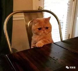 谜男方法猫绳-这种谜之警觉,从它很小的时候就开始了.铲屎官表示它只要发现任何...